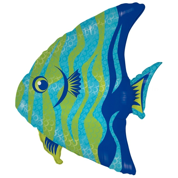 Angel fish 71 cm