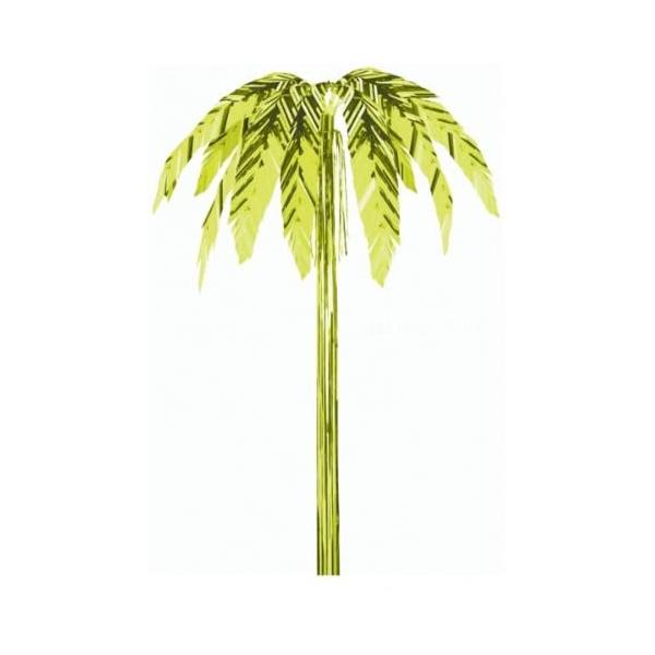 palmier kiwi 1.625m